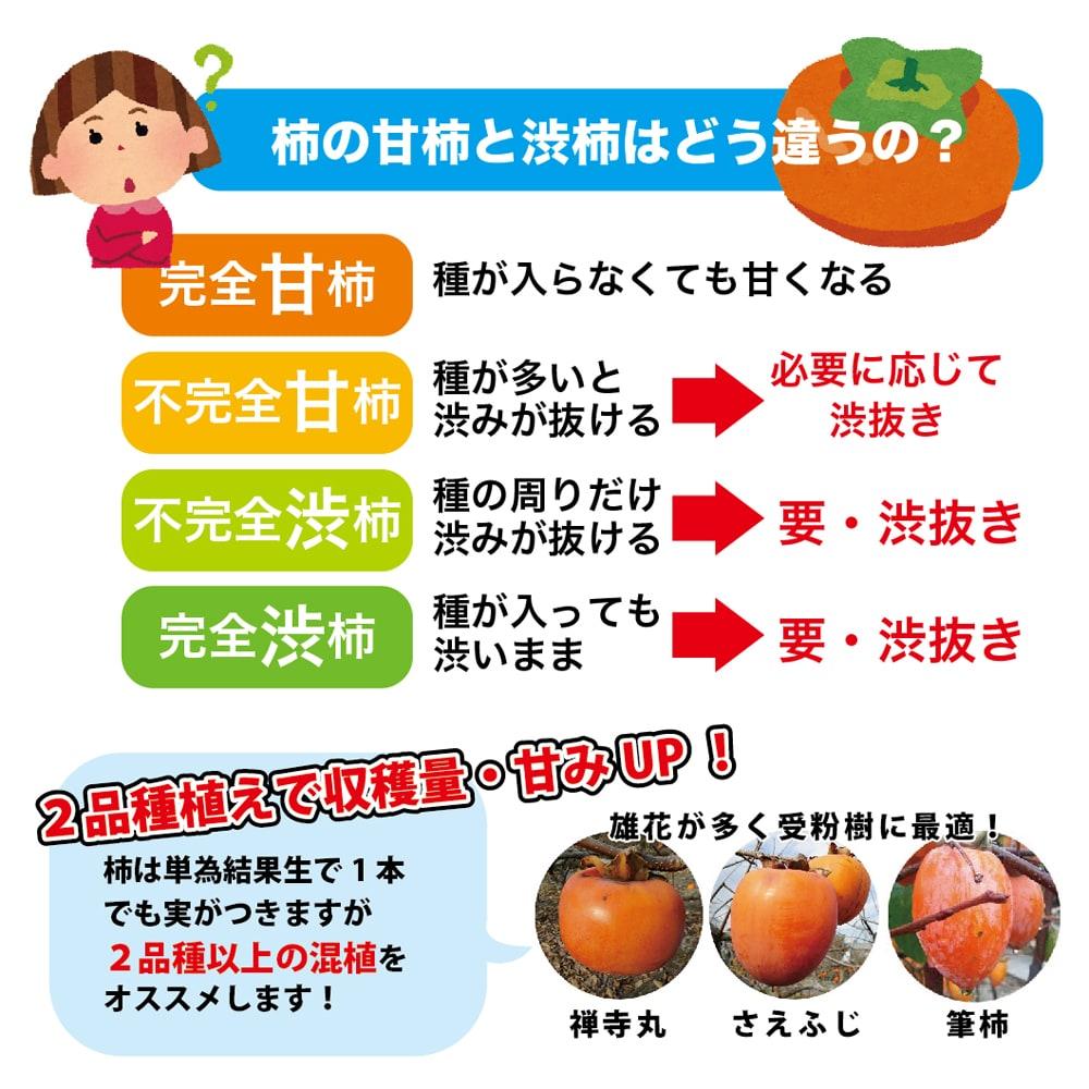 柿  系統