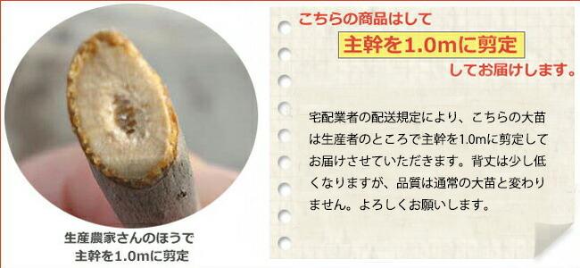 柑橘 本柚子 3
