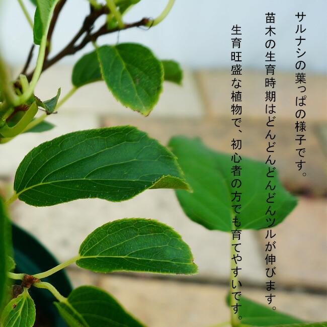 サルナシ の葉