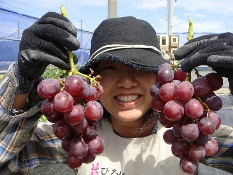 ブドウ 収穫