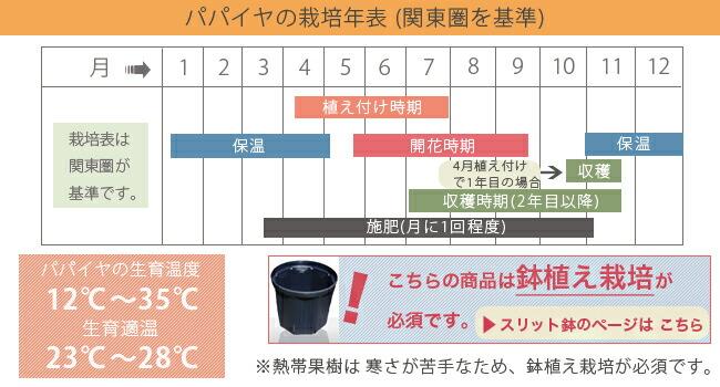 パパイヤ の栽培暦