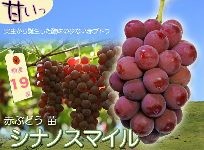 ブドウ シナノスマイル