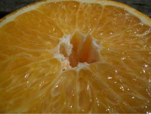 柑橘 いよかん