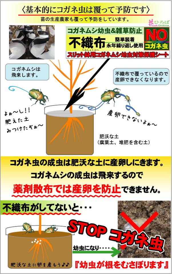 コガネムシの予防