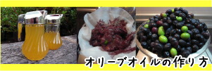 自家製オリーブオイルの作り方