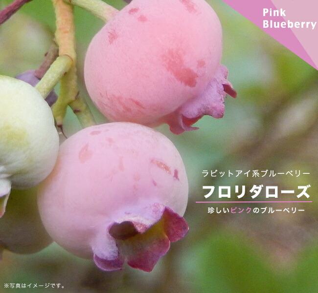 ピンクの果実がなる
