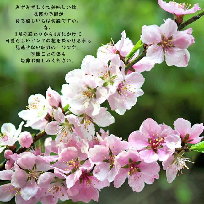 モモ 一宮白桃 3
