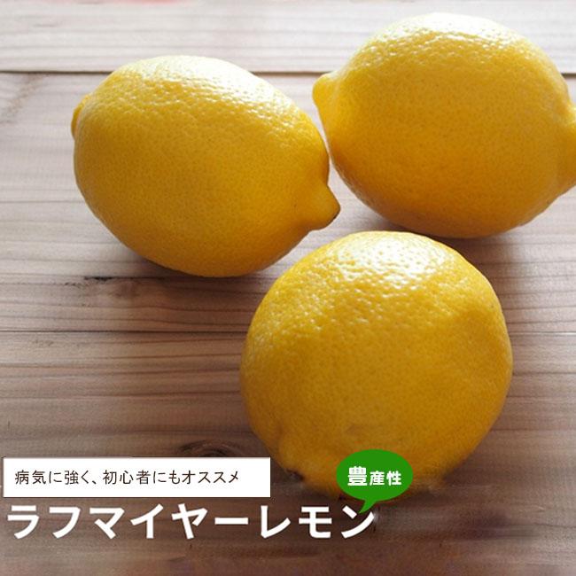 柑橘 ラフマイヤー