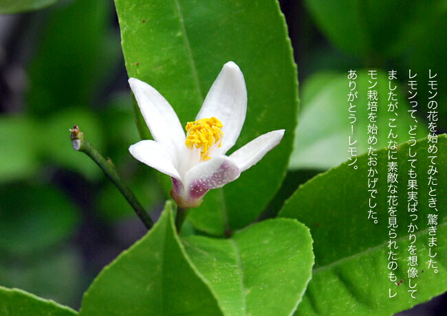柑橘 璃の香 (りのか) 4